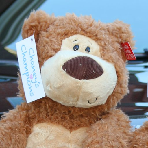 cropped-bear1.jpg